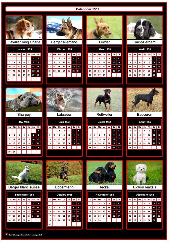 Calendrier 2017 annuel, 12 chiens de race