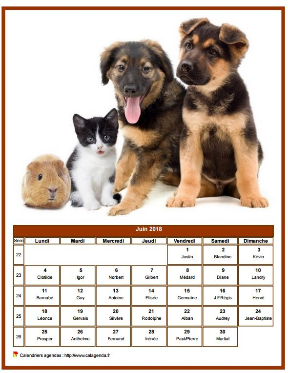 Calendrier juin 2018 chiens