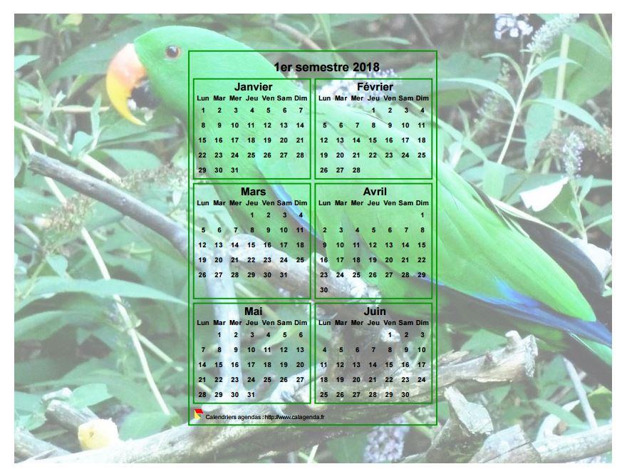 Calendrier 2018 à imprimer semestriel, format paysage, incrusté au centre d'une photo (perroquet vert).