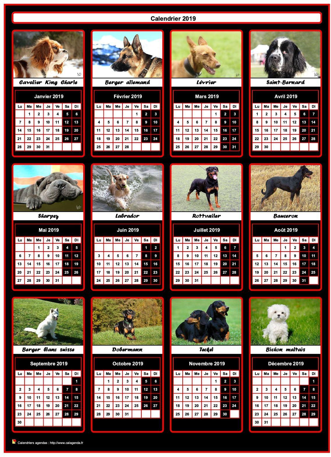 Calendrier 2019 annuel, 12 chiens de race