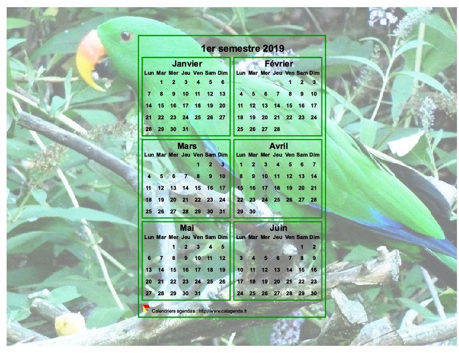 Calendrier 2019 à imprimer semestriel, format paysage, incrusté au centre d'une photo (perroquet vert).