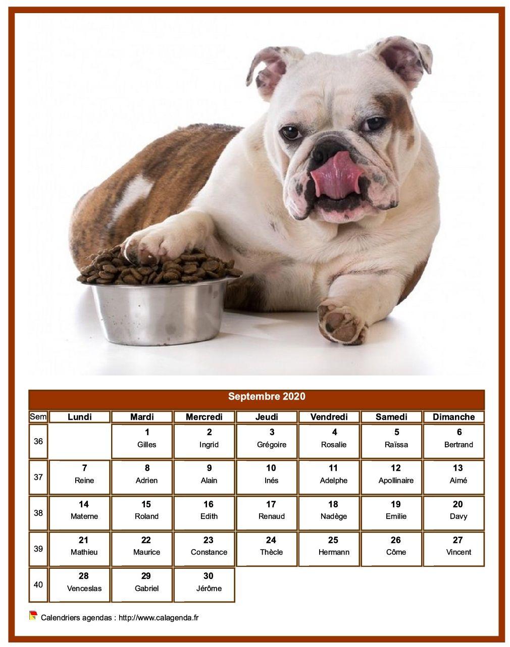 Calendrier septembre 2020 chiens