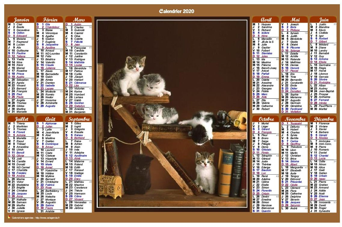 Calendrier 2020 annuel de style calendrierdes postes avec des chats