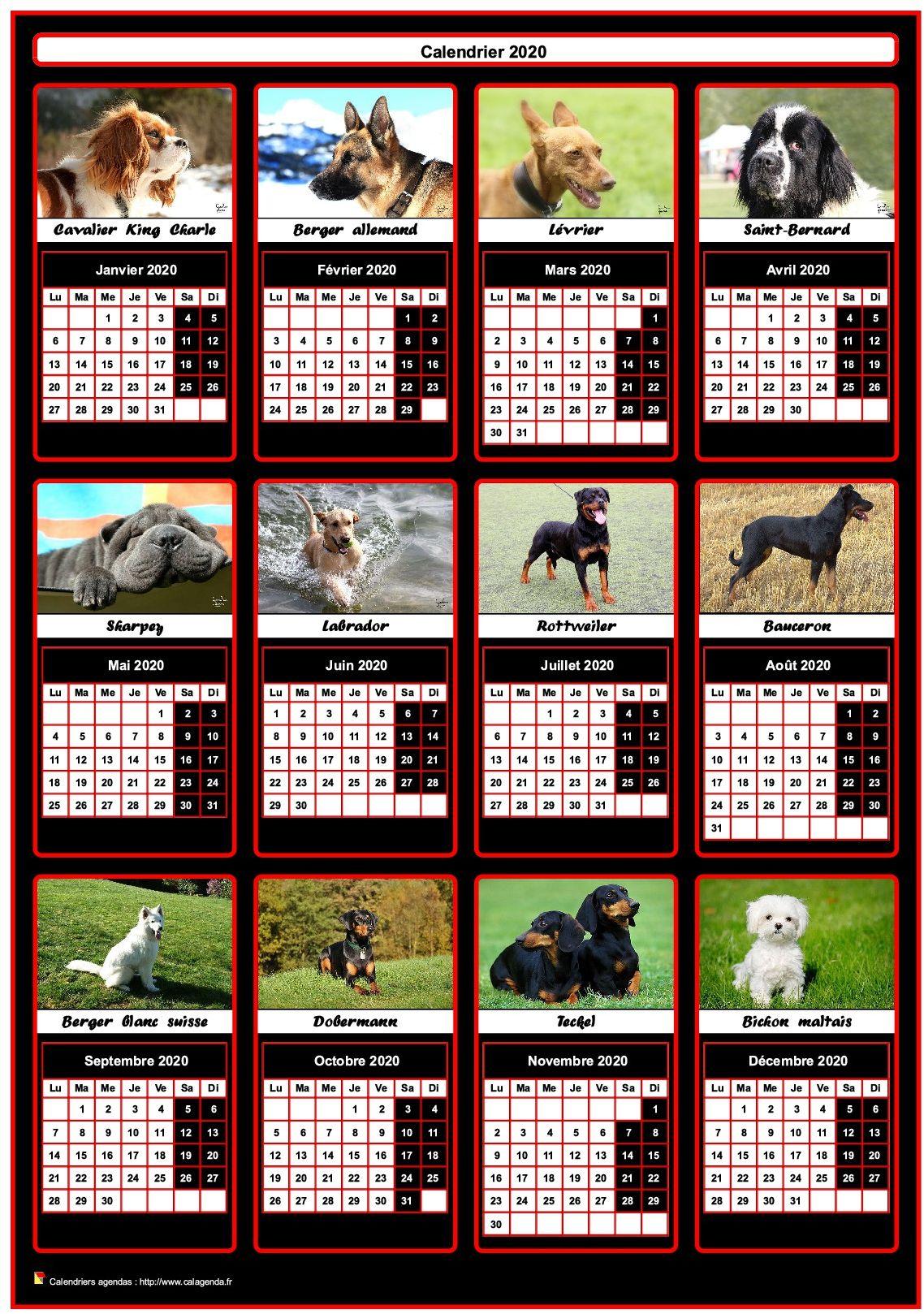 Calendrier 2020 annuel, 12 chiens de race