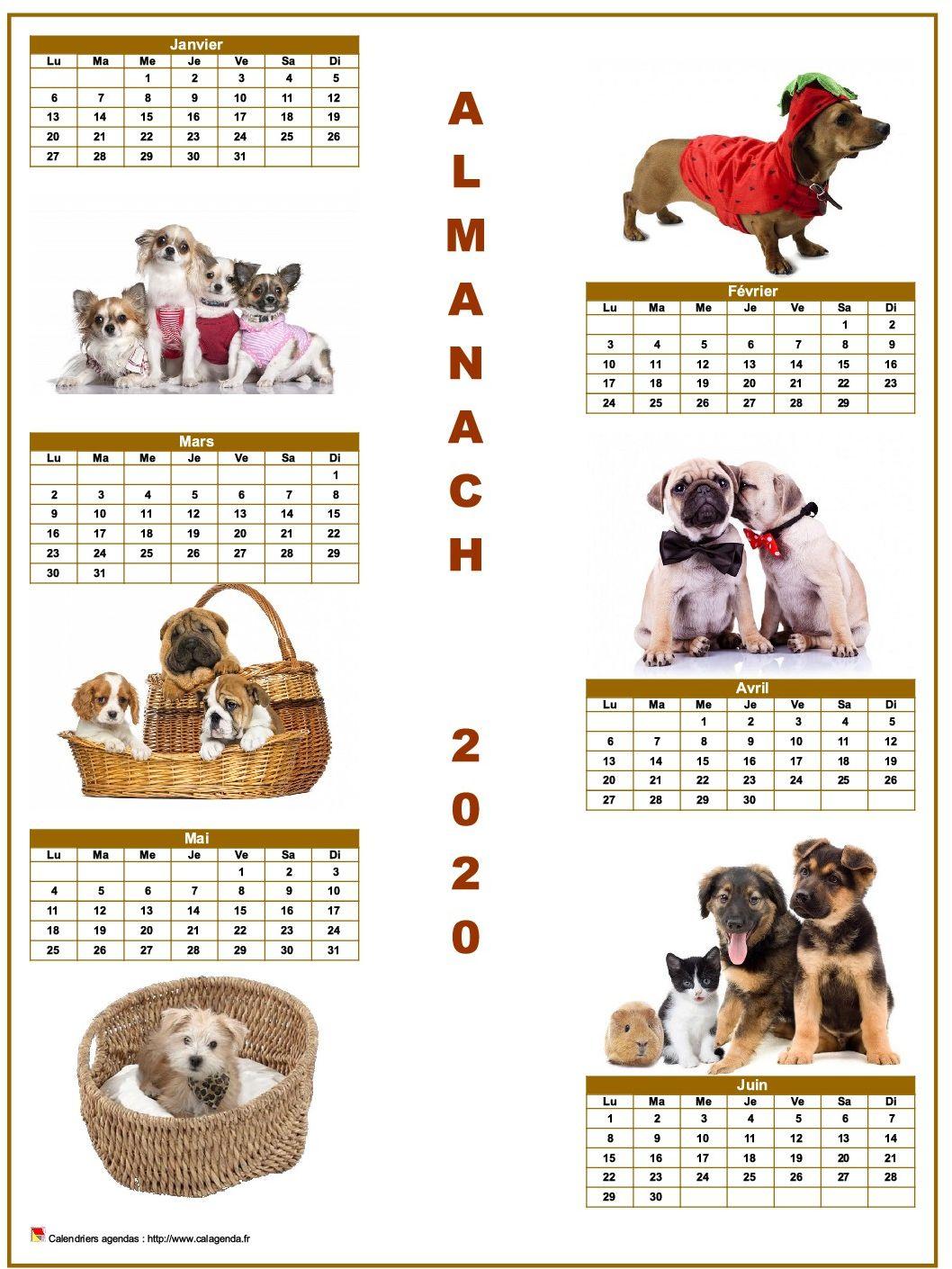 Calendrier 2020 semestriel chiens format portrait