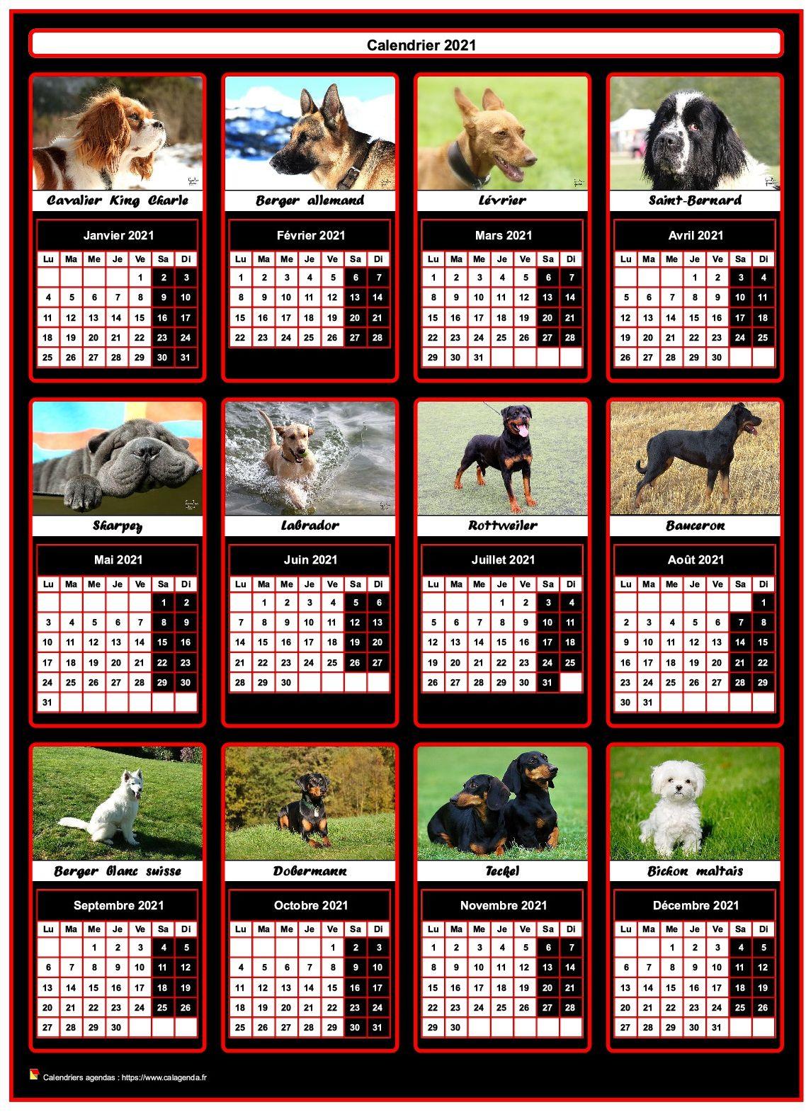 Calendrier 2021 annuel, 12 chiens de race