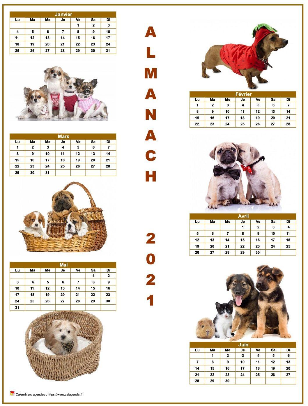 Calendrier 2021 semestriel chiens format portrait