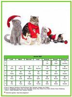 Calendrier chat du mois de janvier