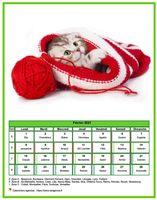 Calendrier chat du mois de février