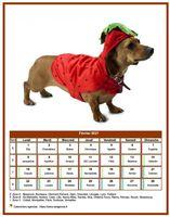 Calendrier chien du mois de février