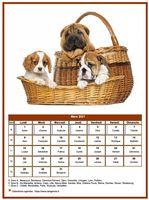 Calendrier chien du mois de mars