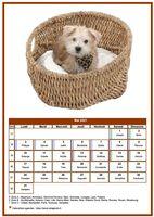 Calendrier chien du mois de mai