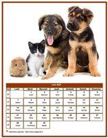 Calendrier chien du mois de juin