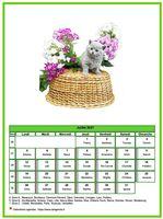 Calendrier chat du mois de juillet