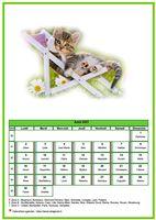 Calendrier chat du mois d'août