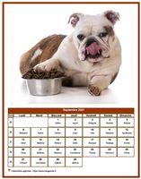 Calendrier chien du mois de septembre